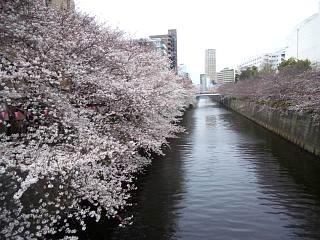 20150329目黒の桜(その55)