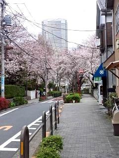 20150329目黒の桜(その57)