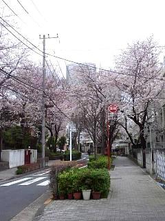 20150329目黒の桜(その58)
