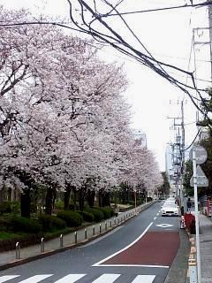 20150329目黒の桜(その60)