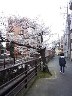 20150329目黒の桜(その62)
