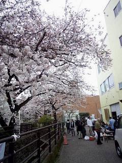 20150329目黒の桜(その64)
