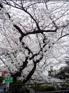 20150329目黒の桜(その67)
