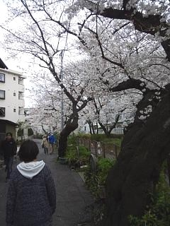20150329目黒の桜(その70)
