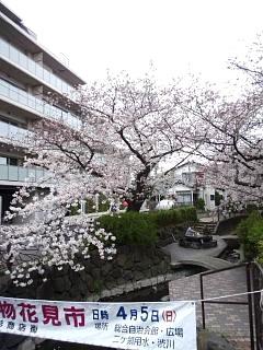 20150329目黒の桜(その72)