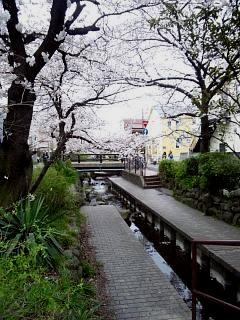20150329目黒の桜(その74)