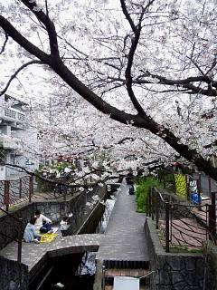 20150329目黒の桜(その77)