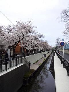 20150329目黒の桜(その78)