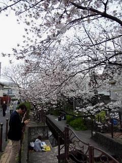 20150329目黒の桜(その79)