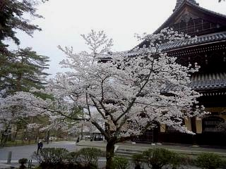 20150403南禅寺(その9)