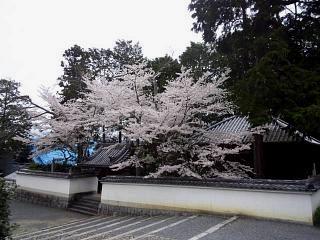 20150403南禅寺(その17)