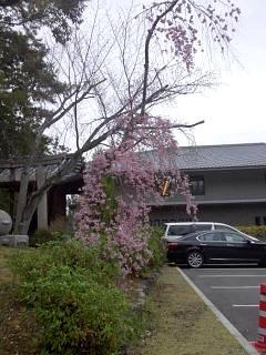 20150403南禅寺(その30)