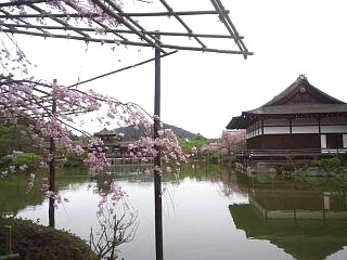 20150403平安神宮(その24)