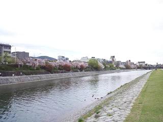 20150403鴨川縁(その6)