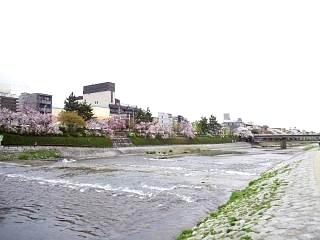 20150403鴨川縁(その13)