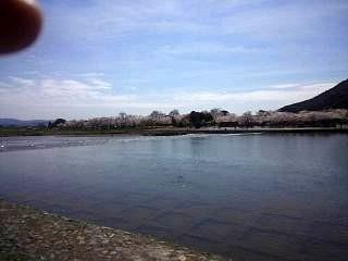 20150404嵐山渡月橋(その1)