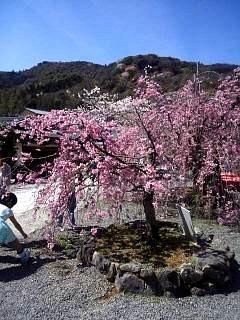 20150404嵐山桜(その10)