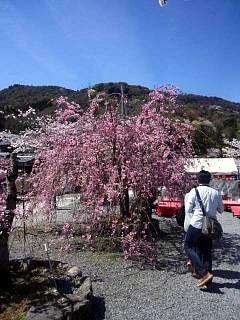 20150404嵐山桜(その11)