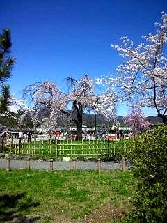 20150404嵐山桜(その12)