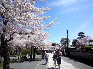 20150404嵐山桜(その16)