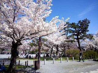 20150404嵐山桜(その17)