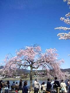 20150404嵐山桜(その18)