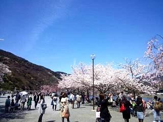20150404嵐山桜(その19)