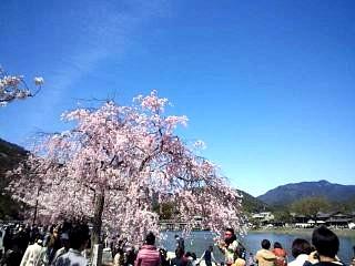20150404嵐山桜(その20)