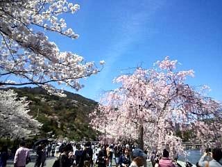 20150404嵐山桜(その21)