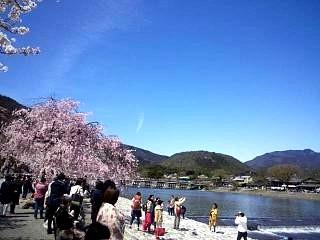 20150404嵐山桜(その22)