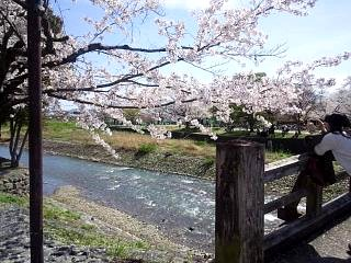 20150404嵐山桜(その23)