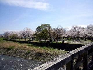 20150404嵐山桜(その24)