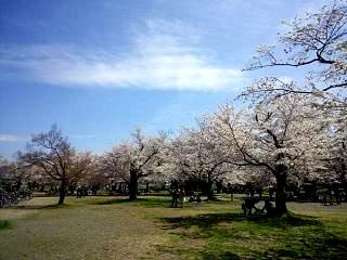 20150404嵐山桜(その27)