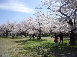 20150404嵐山桜(その28)