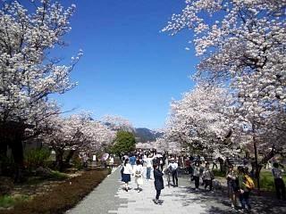 20150404嵐山桜(その29)