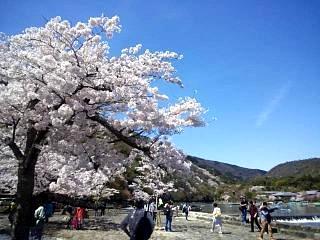 20150404嵐山桜(その36)