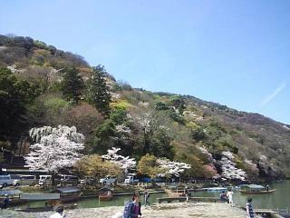 20150404嵐山桜(その39)