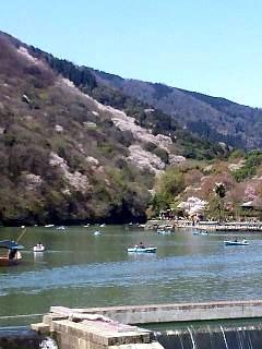 20150404嵐山桜(その41)