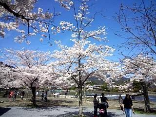 20150404嵐山桜(その42)