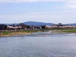 20150404嵐山桜(その46)