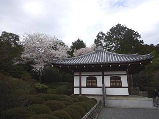 20150404竜安寺(その10)