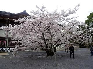 20150404仁和寺(その2)