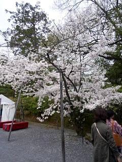 20150404仁和寺(その3)
