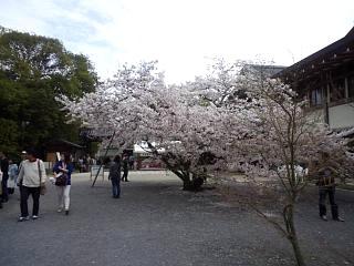 20150404仁和寺(その4)