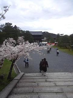 20150404仁和寺(その6)