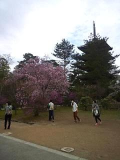 20150404仁和寺(その15)