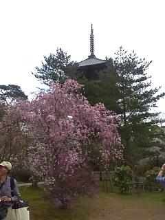 20150404仁和寺(その18)