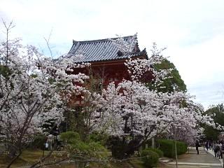 20150404仁和寺(その33)