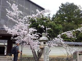 20150404仁和寺(その34)