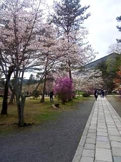 20150404仁和寺(その40)